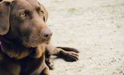 Pet Therapy: Teaching an old dog, new tricks