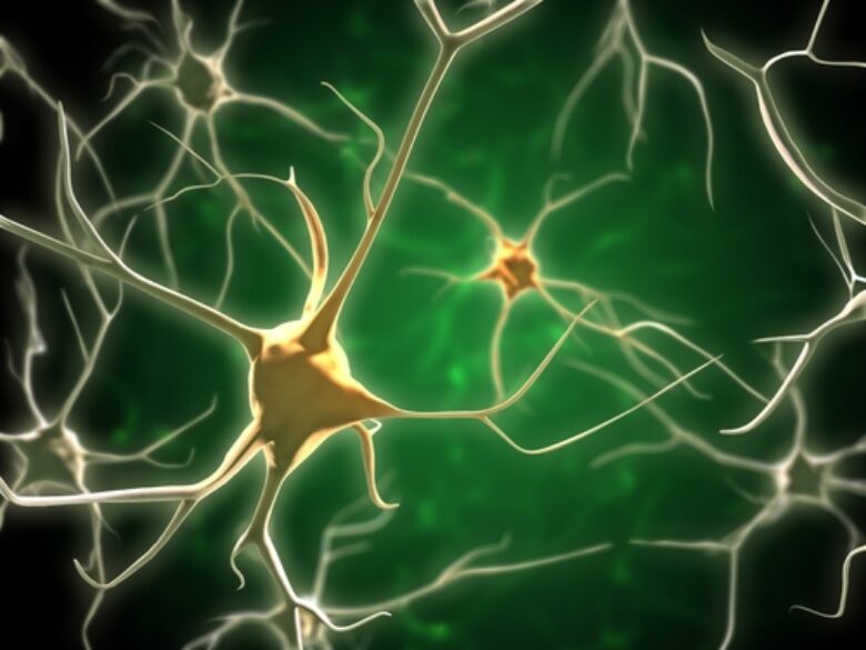 Serotonin levels may be a critical factor in determining who suffers from drug addiction problems.